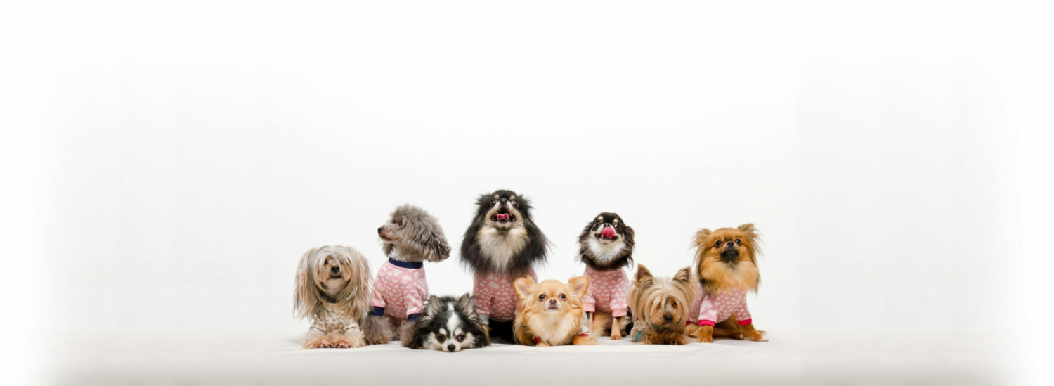 Sweet Paws Dog Grooming Services